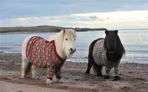 This image is in no way related to the post. I just like Shetland ponies, and I think it is cute how they're wearing jumpers (I bet they hate them, though in this pic they look quite happy). I just didn't want the featured image to be one of Cheney or Rumsfeld. (The pic.is from www.telegraph.co.uk).
